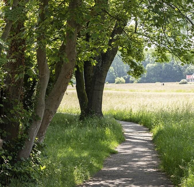 Landschaftspark Wiese Riehen Erholung Foto Martin Graf
