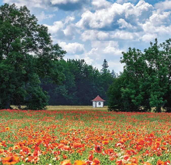 Pure Nature - Flora & Fauna