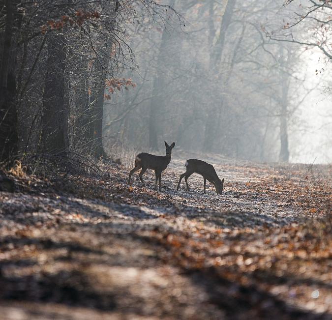Führung à point_Auf der Pirsch. Unterwegs mit Riehens Jagdaufseher. Bild: Shutterstock